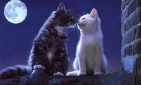 как удалить запах кошачьей мочи