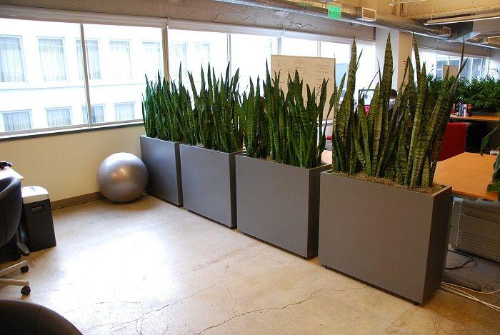Зонирование интерьера растениями